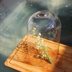 Glass terrarium dome